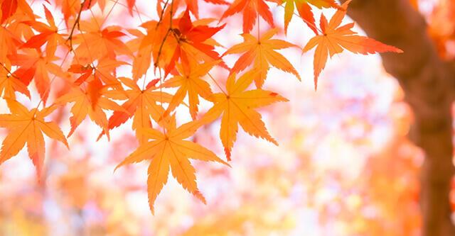 食欲の秋を美味しく健康にキャンペーンを開催